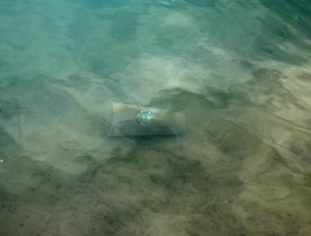 Not-so-distant past: a contemporary Starbucks cup just under the surface. If people hundreds of years from stumbled upon this, would they believe there used to be mermaids here? October 2016
