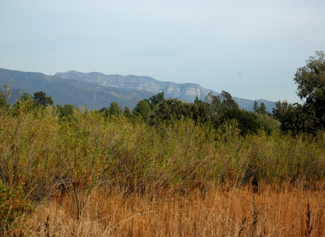 View of Topa Topa bluffs from the Ojai Wetland Preserve. October 2016
